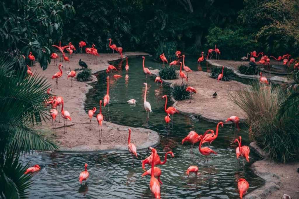 Tiere im Zoo fotografieren Tipps von Ruben Schäfer
