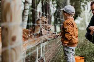Tiere im Zoo: So machst du die besten Bilder
